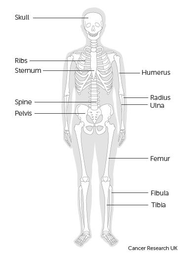 A peritoneális rák természetes kezelése. A peritoneális rák természetes kezelése - Vérrák