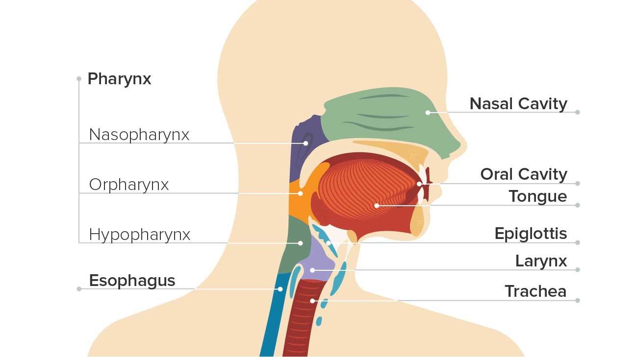 A gégerák terápiája, kezelési terv és a kezelések különböző formái